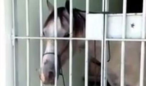 лошадь арест