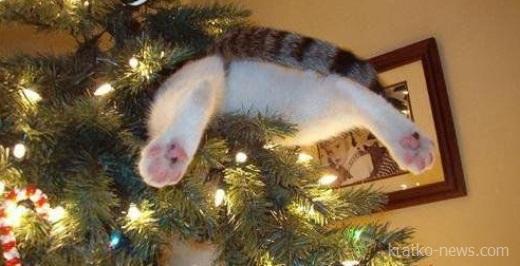 Кот и елка