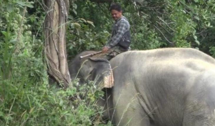 Нападение слона