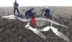 Плезиозавр Антарктида