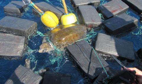 черепаха кокаин