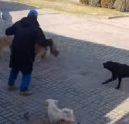 Стая собак напала