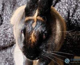 кролик крест