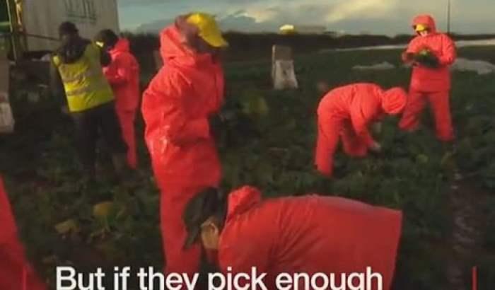 Британцы на огороде