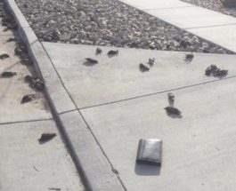 Юта птицы