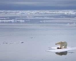 арктика тает лед