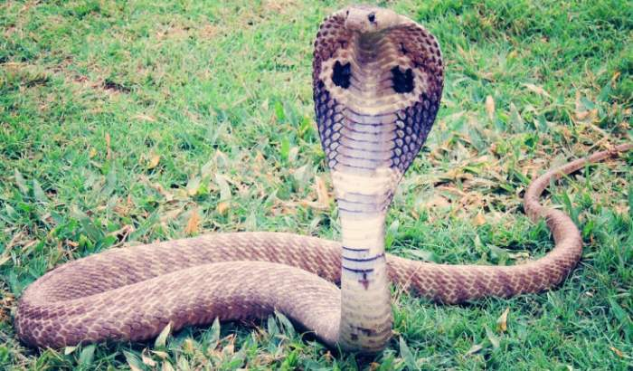 битва змей