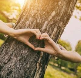 замуж за дерево