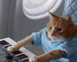 кошка-пианистка