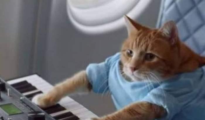 Скончался кот-пианист Бенто, ставший звездой интернета в 2009г