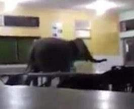 слон малайзия