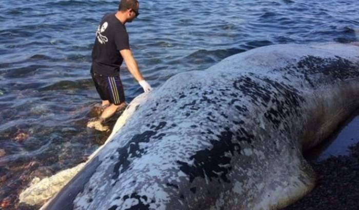 Мертвый кит