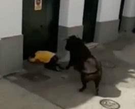 бык убил