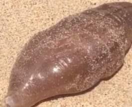 существо на пляже