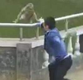 толкнул обезьяну