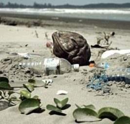 Мутантный фермент,пластиковые бутылки