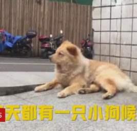 китай собака