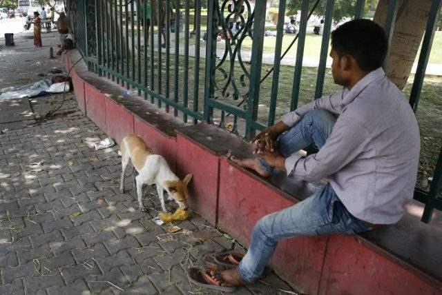 собаки индия
