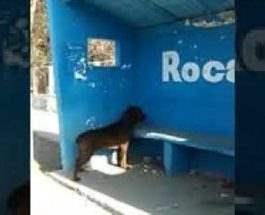 собака стена