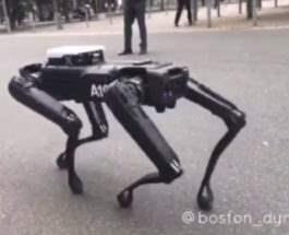 spotmini-robot