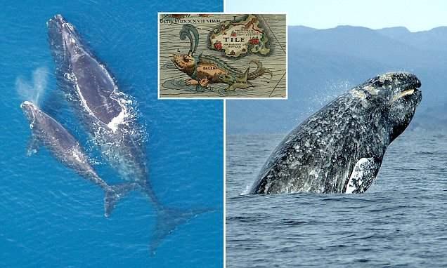 Древние римляне охотились на китов