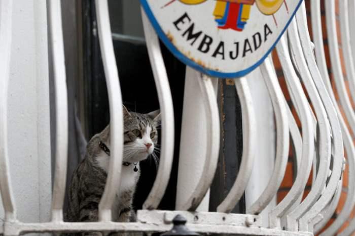 кот ассанджа