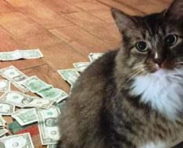 кошка и доллары