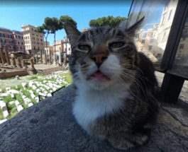кошка google maps