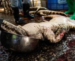 крокодилы резня