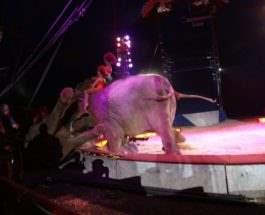 слон упал