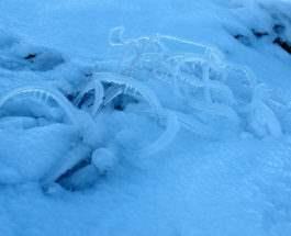 черви на льду