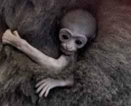 Новорожденная обезьяна
