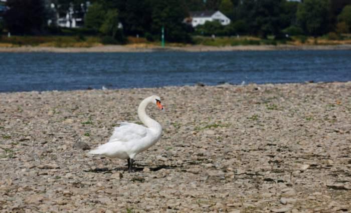 Уровень реки Рейн