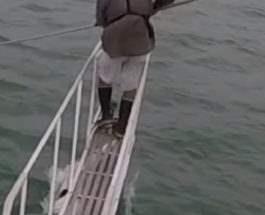 акула сомал