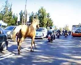 байкер лошадь польша