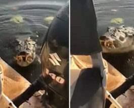 крокодил напал