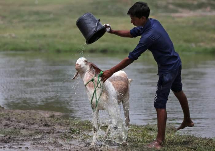 купает козу