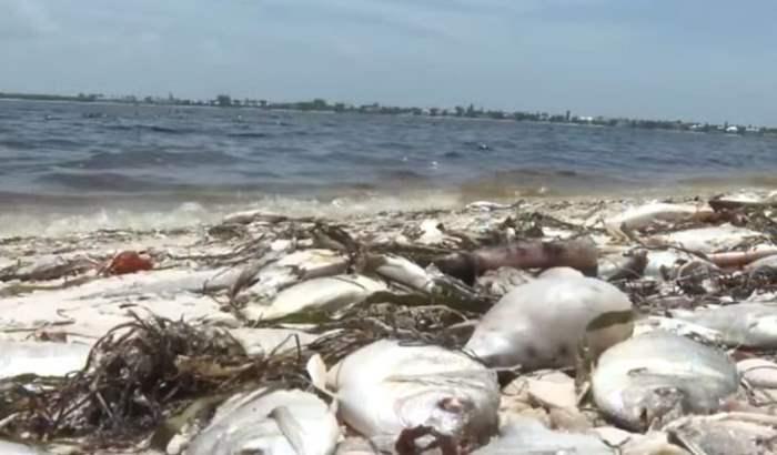 мертвые рыбы