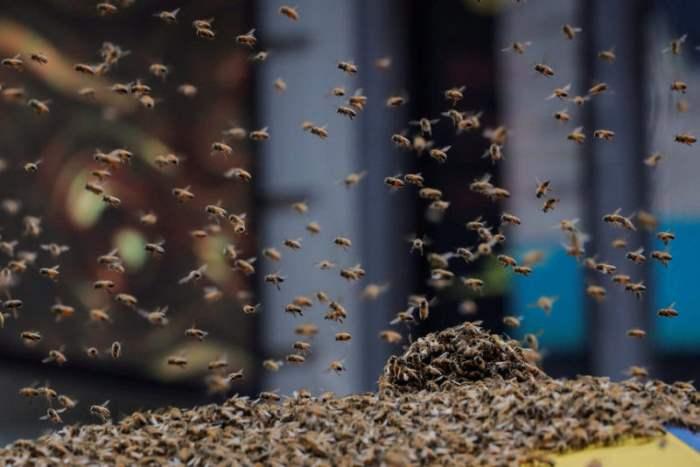 пчелы нью йорк