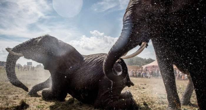 слоны Дания