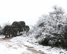 Африка снег