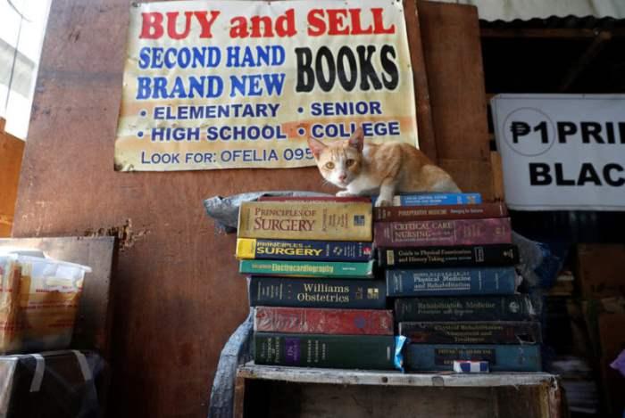 Бушные книги