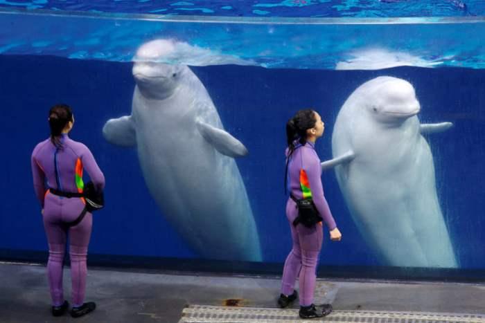 Дрессировщики перед аквариумом