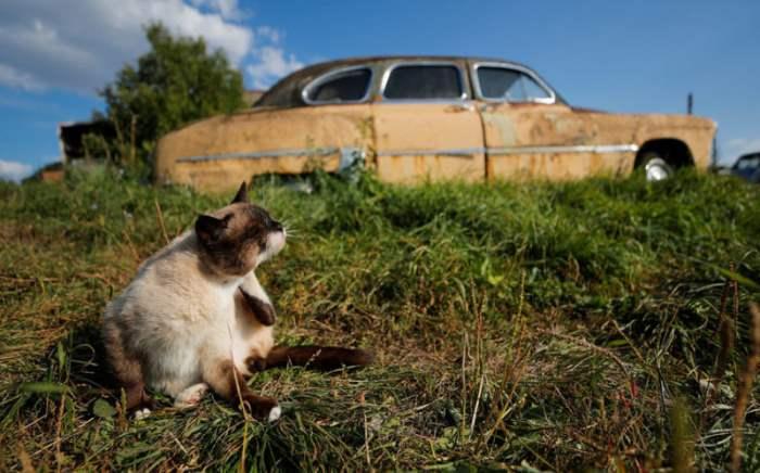Кошка сидит перед ретро-автомобилем,