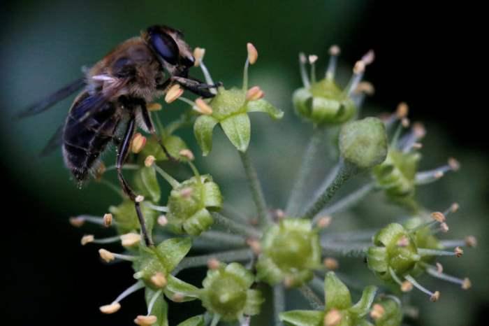 Насекомые собирают пыльцу
