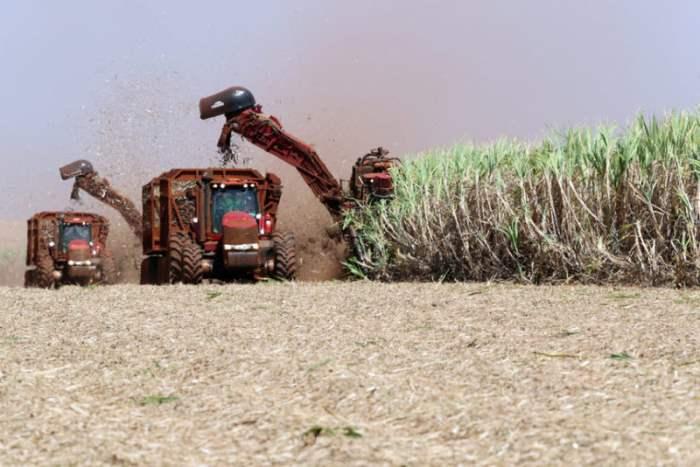 Сбор урожая сахарного тростника