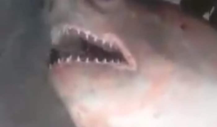 акула енисей