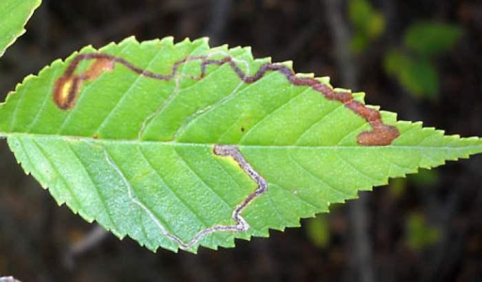 бабочки сибирь