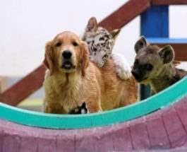 в Пекинском зоопарке.