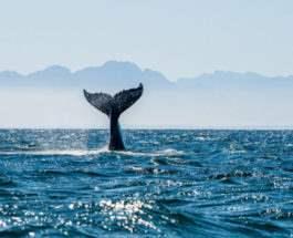 кит арктика